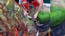 Yosun Bağlamış Caretta Carettayı Balıkçılar Kurtardı
