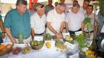 Antalya'da İlk Tropikal Meyve Hasat Şenliği