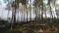 ORMAN ARAZİSİ - Uşak'ta Orman Yangını