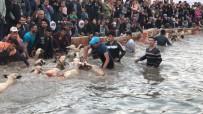 Şafak Vakti Koyunlarını Buz Gibi Sudan Geçirmek İçin Yarıştılar