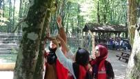 Gençler, Kuşlar İçin Ağaçlar Yemlik Astı
