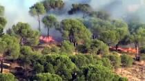 Ayvalık'ta Ağaçlık Alandaki Yangın Söndürüldü