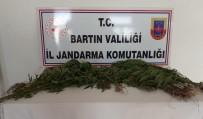 Bartın'da Hint Keneviri Operasyonu Açıklaması 2 Gözaltı