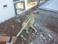 Burhaniye'de Havuza Düşen Köpeği İtfaiye Kurtardı