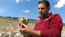 Kars'ta Bulunan Yaralı Kerkenez Tedavi Altına Alındı