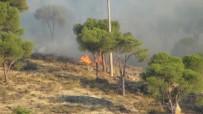 Sigara İzmariti Ormanı Yaktı
