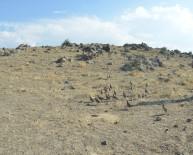 Ağrı Dağı Milli Parkına Bin Keklik Bırakıldı