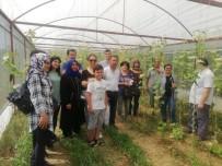Alaşehir'de Bilinçli Tarım İçin Seracılık Kursu