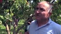 RECEP SERT - 'Marmara'nın Antalyası' Şeftalide İddialı
