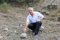 Sivas'ta 55 Milyon Yıllık Deniz Canlısı Fosili Bulundu