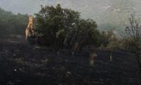 Yangında, Ağaçlar Zarar Gördü