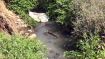 Hassa'da Su Kanalına Akan Lağım Ve Kanalizasyona Tepki
