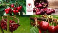 Havza Bazlı Meyveciliği Geliştirme Projesine Son Başvuru 2 Eylül