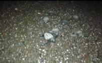 CARETTA CARETTA - Minik Carettalar Ay Işığı İle Sokak Lambasını Karıştırıp Yolunu Şaşırdı