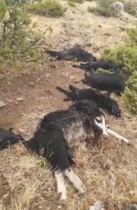 Elazığ'da Yıldırım Düştü, 12 Keçi Telef Oldu,4'Ü Yaralandı
