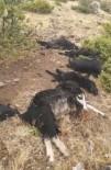 YILDIRIM DÜŞTÜ - Elazığ'da Yıldırım Düştü, 12 Keçi Telef Oldu,4'Ü Yaralandı