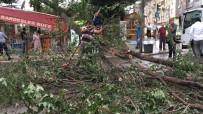 ŞİDDETLİ FIRTINA - Fırtınanın Yıktığı Ağaç Büfenin Üzerine Devrildi