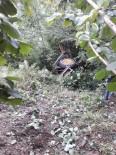 GÜMELI - Gümeli'de Traktör Kazası Açıklaması 1 Yaralı