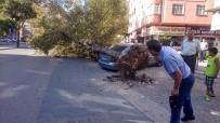 Römorkun Söktüğü Ağaç Otomobillerin Üzerine Devrildi