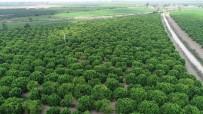 TARıM SIGORTALARı HAVUZU - TARSİM'den Çiftçilere 5,4 Milyar TL Ödeme