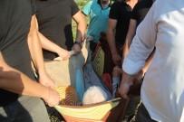 Evine Yol Olmadığı İçin Battaniye İle Ambulansa Taşınıyor