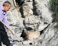 GEÇITLI - Kayalıklarda Sıkışan Köpek Kurtarıldı