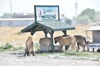 Sokak Hayvanları İçin Yeni Beslenme İstasyonları Kuruluyor