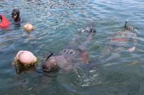 Yalovalı Zıpkıncılar Bu Kez Deniz Canlıları İçin Daldı