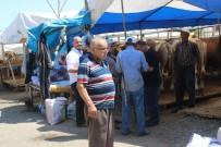 Zeytinburnu'nda Kurbanlık Satışları Başladı