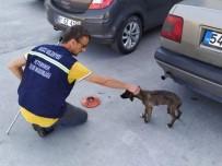 SOKAK KÖPEKLERİ - Vatandaşların Şikayet Ettiği 870 Köpek Şehir Merkezinden Toplandı