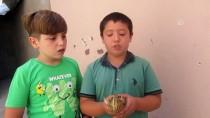 Çocukların Bulduğu Balaban Koruma Altına Alındı
