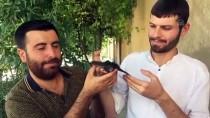 BELEDİYE İŞÇİSİ - Mardin'de Yaralı Ebabil Tedavi Altına Alındı