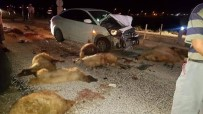 Otomobil Koyun Sürüsüne Daldı, 15 Koyun Telef Oldu