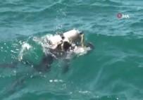 Şile'de Denizde Kaybolan Gencin Cansız Bedeni Beykoz'da Bulundu