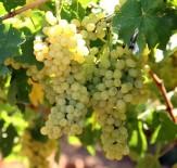Ruhsar Pekcan - Yaş Meyve Sebze Ve Mamulleri İhracatı Yüzde 25 Arttı