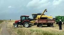 Çiftçilerin Sıcak Havada Hasat Mesaisi