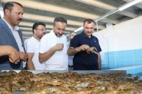 Elazığ'dan Dünya Pazarına Kerevit, Kilosu 100 TL