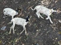 'Genç Çiftçi Projesi' Kapsamında Dağıtılan Küçükbaş Hayvanlar Vebalı Çıktı