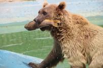 Hayvanat Bahçesinde Fıskiyeli Serinlik