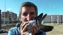 ÖZGÜRLÜK - Kazalara Rağmen Kuş Sevgisinden Vazgeçmedi