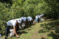 FINDIK TOPLAMA - Sigortalı Fındık İşçileri Bahçede