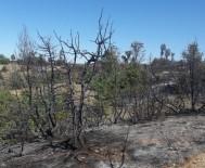 Sungurlu'da Orman Yangını