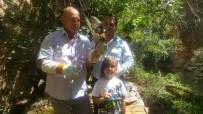 YÜRÜYÜŞ YOLU - Belediye İşçisi Ölmek Üzereyken Kurtardığı Kerkenek Kuşunu 25 Günde İyileştirdi