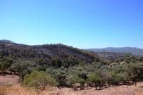YıLMAZ ÖZTÜRK - Binlerce Çam Ağacı, Yüzlerce Zeytin Ağacı Yok Oldu