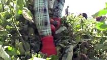 Kilisli Çiftçiler, Suriye Pazarında Yerini Almak İstiyor