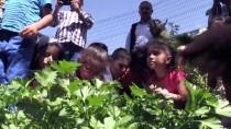 ORGANİK MEYVE - Minik Öğrencilerin Okul Bahçesinde Hasat Heyecanı
