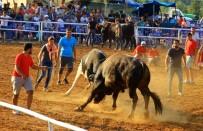 YERKESIK - Boğalar Arenaya Sığmadı