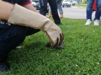 Otomobilin Motoruna Giren Yavru Kediyi İtfaiye Kurtardı