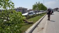 Refüje Çıkan Otomobil Ağaca Çarptı Açıklaması 1 Çocuk Yaralı