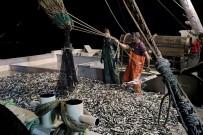 OSMAN KAYMAK - Samsunlu Balıkçılar Denizden 120 Kasa İstavritle Döndü